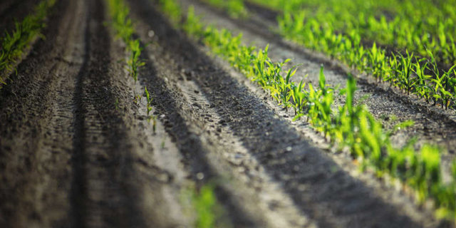 ΕΕ: Κανόνες για την προστασία των αγροτών απέναντι στις αθέμιτες εμπορικές πρακτικές