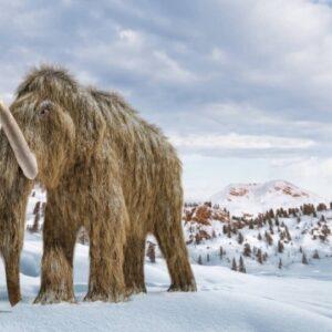 Σε απομεινάρια μαμούθ στη Σιβηρία βρέθηκε το αρχαιότερο DNA στον κόσμο